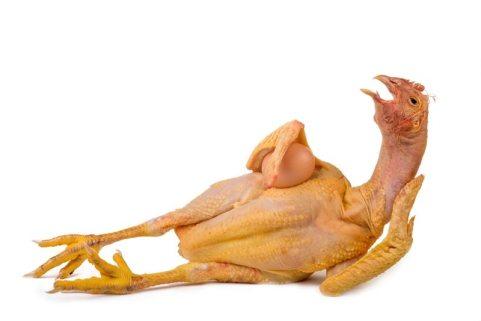 sexy-chicken.jpg